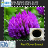 Large Stock 40% Total Isoflavones Red Clover Flowers Extract