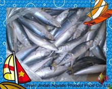 Frozen fish pacific mackerel dried whole round sea frozen mackerel fish