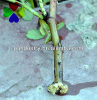 Agrochemical for cuttings to take root Water soluble powder Sodium 3-indolebutyrate IBA 98%TC