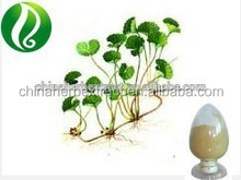 Gotu Kola extract powder Total triterpenes 10% 20% 40% 80% 90%