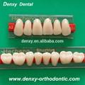 3- capas de color amarillo de la prótesis dental de acrílico de dientes de resina sintética