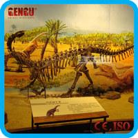 Museum equipment t-rex dinosaur skeleton for sale