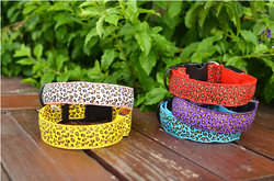 colorful paper pet collar & remote training pet collar & pet collar and leash