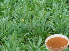 Natural colour plant export radix glycyrrhizae extract powder