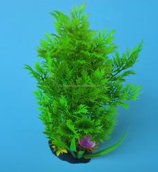 Freshwater aquarium plants CS-0766 with good quality for landscape the fish tank