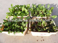 vegetable fertilizer clay soil pellets