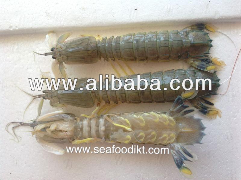 Edible Mantis Shrimp - Buy Mantis Shrimp For Sale Product on Alibaba ...