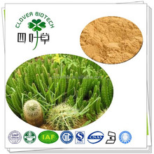 10:1 High quality pure natural cactus extract powder