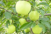 Good quality chinese cheap fresh green gala apple for sale