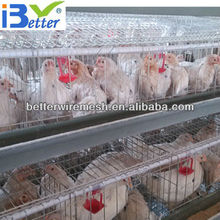 New Design BT factory A-96 egg laying cages (Welcome to Visit my factory)