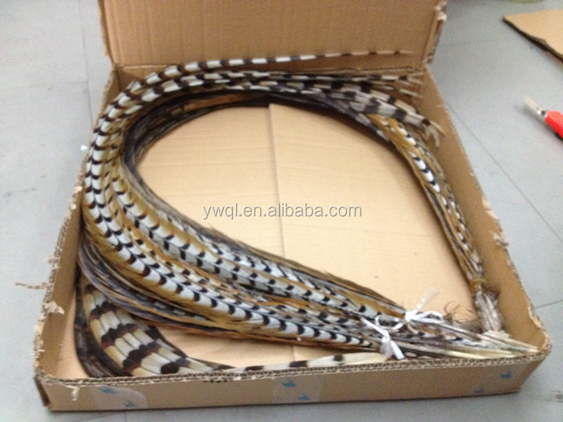 Reeves Pheasants For Sale Reeves Pheasant Feather
