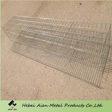 poultry farm chicken layer cage indoor using