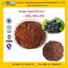 GMP Factory Supply Natural Grape Seed Extract, Proanthocyanidin Extract
