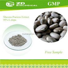 Wholesale mucuna extract levodopa parkinson's medicine