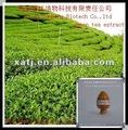 bio extracto de té verde