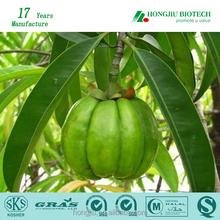 50% 60% 95% HCA GMP Factory Supply Garcinia Cambogia Extract