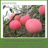 Fuji Apple Exporter from Shandong / Fuji Apple