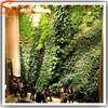 Special design factory wholesale cheap environmental artificial green wall artificial grass green wall for decor