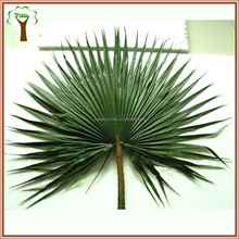 preserved palm leaf in round shape
