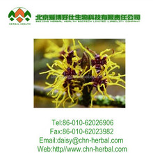 China Powder Leaf Witch Hazel Extract