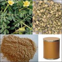 Tribulus Terrestris Extract Total Saponins 20%-80%