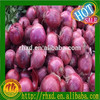 /product-gs/hot-sale-high-quantity-fresh-cheaper-chinese-onion-60261733769.html