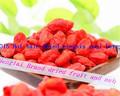 Goji berry extrait prix plancher en chine/100% biologique premières baies de goji