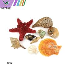 Wholesale DIY Packing Natural SeaShell