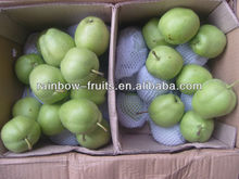 fresh early matured su pear Chinese Fresh pear pome Su pears