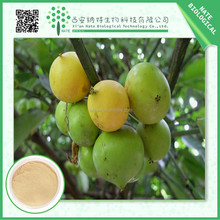 Hot Sale Products Natural Garcinia Cambogia Extract 50% by HPLC