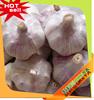 2015 new season normal garlic,natural and from shandong