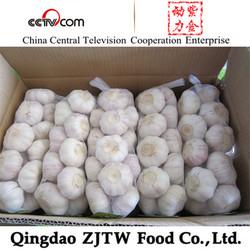 natural garlic fresh white garlic for africa garlic market