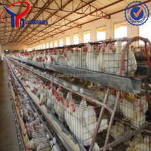 types of laying hens/name of poultry farms