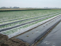 Hot sale agriculture polyethylene film, clear and bright plastic reinforced film for greenhouse from YIXIN