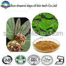 KOSHER Manufacture Natural Euphorbia Herb Extract Powder