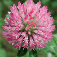 100% natural Red Clover extract at favorable price