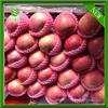 hot sell big size red qinguan apples shanxi qinguan apples