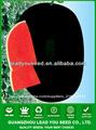 JW18 alta calidad y semillas híbridas de sandía negra f1 para la siembra de semillas