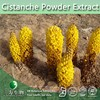 Cistanche Powder Extract, Cistanche P.E. (Natural and Healthy supplement)