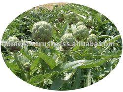 Cynara Scolymus dried extract powder Vietnam