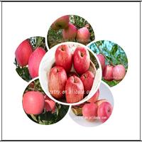 apple export fruit brand