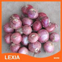 Wholssale fresh new crop dutch red onion
