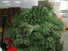 2015 new seasonIQF & Frozen yard long bean cut asparagus beans cut Vigna unguiculata sesquipedalis Vigna vexillata bighorn vetch