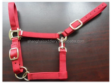 RED PP horse halter with Golden Metal Fittings