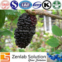 mulberry fruit extract, mulberry fruit p.e, mulberry fruit powder