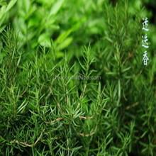 China rosemary leaf extract/natural food additive/ rosemarinic acid 98%
