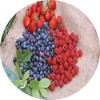 Supply iqf frozen fruits