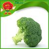 Wholesale organic green vegetables IQF broccoli