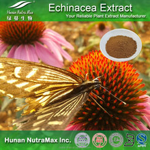 Echinacea Pallida Extract, Echinacea Pallida Extract Polyphenols, Echinacea pallida Extract powder