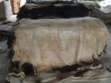 HIGH QUALITY WET SALTED COW HIDES/WET BLUE GOAT SKIN /Wet blue sheep skins